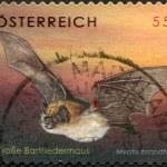 A stamp printed in Austria, shows Brandt's Bat (Myotis brandtii), circa 2007 — Stock Photo