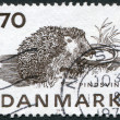 A stamp printed in the Denmark, dedicated to the protection of wild animals, shows the hedgehog, circa 1975 — Stock Photo