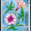A stamp printed in the Equatorial Guinea, shows the flower of Ipomoea Palmata (Morning glory), circa 1976 — Stock Photo