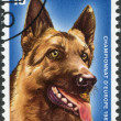 LUXEMBOURG - CIRCA 1983: A stamp printed in Luxembourg, is dedicated to European Working Dog Championship, shows Shepherd Dog, circa 1983 - Stock Photo