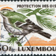LUXEMBOURG - CIRCA 1970: A stamp printed in Luxembourg, is dedicated to the 50th anniversary of the Luxembourg Society for the protection and study of birds - Stock Photo