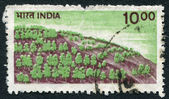 A stamp printed in India, shows a forest on the hillside, circa 1984 — Stock Photo