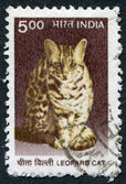 A stamp printed in India, shows a Leopard cat (Prionailurus bengalensis), circa 2000 — Stock Photo
