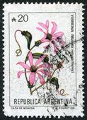 Un sello impreso en la argentina, representa una flor mutisia retusa remy, de 1983 — Foto de Stock