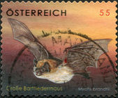 A stamp printed in Austria, shows Brandt's Bat (Myotis brandtii), circa 2007 — Foto de Stock