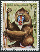 GUINEA BISSAU - CIRCA 1983: Postage stamps printed in Guinea Bissau, shows a monkey Mandrill (Mandrillus sphinx), circa 1983 — Stock Photo