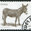 Stock Photo: A stamp printed in the Bulgaria, devoted to farm animals, donkey, circa 1991