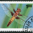 A stamp printed in the Bulgaria, shows the insect, Four-spotted Chaser, circa 1993 — Stock Photo