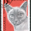 A stamp printed in the Bulgaria, shows a Siamese cat, circa 1989 — Stock Photo #12162026