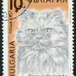 A stamp printed in the Bulgaria, shows a Persian cat, circa 1989 — Foto de Stock