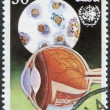 A stamp printed in Cuba, is shown in the context of the human eye and the emblem WHO (World Health Organization), circa 1976 — Stock Photo #12162379
