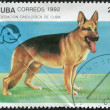 A stamp printed in Cuba, is devoted to the symposium Federation cynologists, depicted German Shepherd Dog (Alsatian), circa 1992 — Stock Photo