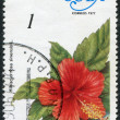Stock Photo: Stamp printed in Cubshows flower Hibiscus rosa-sinensis, circ1977