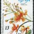 A stamp printed in Cuba, flower shows Caesalpinia pulcherrima, circa 1977 - Stock Photo