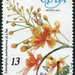 A stamp printed in Cuba, flower shows Caesalpinia pulcherrima, circa 1977 — Stock Photo