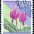 A stamp printed in Japan, shows a flowering Erythronium dens-canis, circa 1994 — Stock Photo