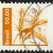 Stock Photo: Postage stamps printed in Brazil, depicted ears of wheat, circ1979