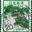 A stamp printed in Japan, depicts Mountain Pine (Pinus mugo), circa 1972 — Stock Photo
