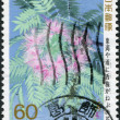 A stamp printed in Japan, shows a flowering Mimosa, circa 1988 — Stock Photo