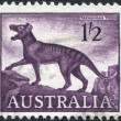 A stamp printed in Australia, shows a Tasmanian tiger (Thylacinus cynocephalus), circa 1961 - Stock Photo