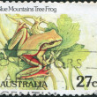 A stamp printed in Australia, shows the Blue Mountains Tree Frog (Litoria citropa), circa 1982 — Stock Photo