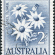 A stamp printed in Australia, shows Flannel Flower (Actinotus helianthi), circa 1959 — Stock Photo