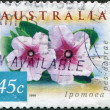 A stamp printed in Australia, shows the Ipomoea pes-caprae, circa 1999 — Stock Photo