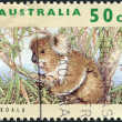 A stamp printed in Australia, shows the Koala (Phascolarctos cinereus), circa 1992 — Stock Photo