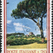 Stamp printed in Italy, shows Stone Pine (Pinus pinea), circ1966 — Stock Photo #12163316
