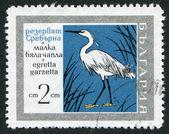 Een stempel gedrukt in bulgarije, toont de kleine zilverreiger (egretta garzetta), natuurreservaat srebarna, circa 1960 — Stockfoto