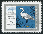 A stamp printed in the Bulgaria, shows the Little Egret (Egretta garzetta), Srebarna Nature Reserve, circa 1960 — Stock Photo