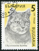 A stamp printed in the Bulgaria, the European cat shows, circa 1989 — Stock Photo
