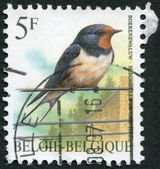 A stamp printed in Belgium, depicts a bird Barn Swallow (Hirundo rustica), circa 1992 — Stock Photo