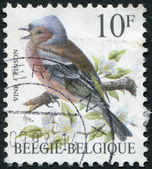 A stamp printed in Belgium, depicts a bird Chaffinch (Fringilla coelebs), circa 1990 — Zdjęcie stockowe