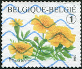 A stamp printed in Belgium, depicts a flower Tagetes, circa 2008 — Stockfoto