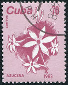 A stamp printed in Cuba, is depicted Sugarcane, circa 1983 — Stock Photo