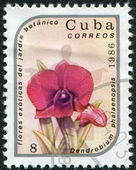 A stamp printed in Cuba shows an orchid (Dendrobium phalaenopsis), circa 1986 — Stock Photo