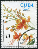 A stamp printed in Cuba, flower shows Caesalpinia pulcherrima, circa 1977 — Stock Photo