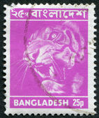 Postage stamps printed in Bangladesh, shows a tiger (Panthera tigris), circa 1973 — Stock Photo