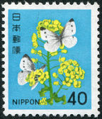 A stamp printed in Japan, shows a flowering rape and butterflies, circa 1980 — Stock Photo