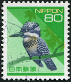 A stamp printed in Japan, depicts a bird Kingfisher (Ceryle lugubris), circa 1994 — Foto de Stock