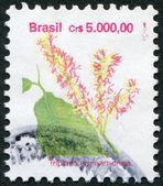 Postage stamps printed in Brazil, shows a flower Triplaris surinamensis (Tachi), circa 1989 — Stock Photo