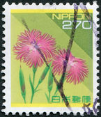 A stamp printed in Japan, depicts a flower Dianthus superbus (Large Pink), circa 1994 — Stock Photo