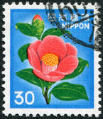 A stamp printed in Japan, depicts a flower Japanese Camellia (Camellia japonica), circa 1980 — Stock Photo