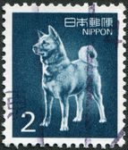 A stamp printed in Japan, depicts a dog breed Akita Inu, circa 1989 — Stock Photo