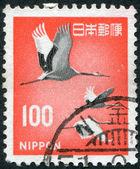 Znaczek wydrukowany w japonii, pokazuje czerwono koronowany żuraw (grus japonensis), około 1968 — Zdjęcie stockowe