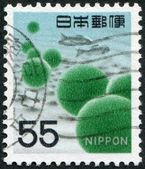 A stamp printed in Japan, depicts the alga Cladophora Sauteri, circa 1969 — Stock Photo