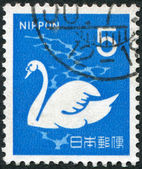 A stamp printed in Japan, depicts a white swan (Cygnus), circa 1971 — Stock Photo
