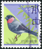 A stamp printed in Japan, depicts Eurasian Bullfinch (Pyrrhula pyrrhula), circa 1994 — Stock Photo
