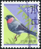 A stamp printed in Japan, depicts Eurasian Bullfinch (Pyrrhula pyrrhula), circa 1994 — Stock Photo